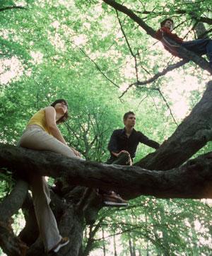 student_tree-istock